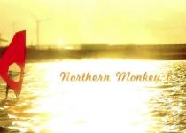 Liverpool Northern Monkey 6
